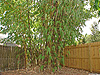 15-BR-Castaways-3bed-Bamboo-Tree